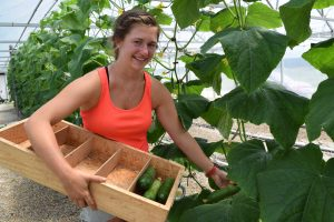 Undergraduate researcher Evie Smith picks cucumbers in the aquaponics greenhouse at Auburn's E.W. Shell Fisheries Center.