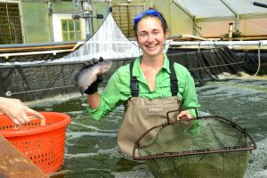 Evie Smith Sorting fish in the tilapia tank