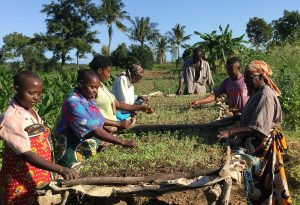 Members of one of the women's groups participating in Oyeska Greens make quick work of weeding their greenhouse